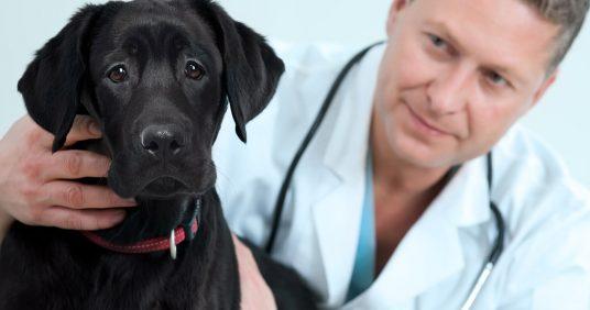 Ветпомощь животному – хирургическое вмешательство